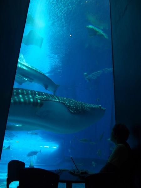 ジンベエザメが泳ぐ水槽に隣接しているカフェ「オーシャンブルー」