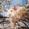 スクリーンショット 2013-03-31 16.44.32